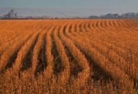 Soja lidera exportações do agronegócio em maio