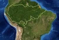 Medidas do governo provocam redução de 16% no desmatamento na Amazônia Legal