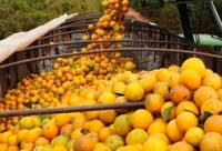 Exportação de frutas dispara e atinge US$ 98,1 milhões no primeiro bimestre