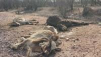 Governo libera mais 400 milhões para a região da seca