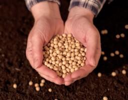 Safra recorde deve colher 273,8 milhões de toneladas de grãos