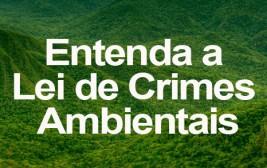 Militares aplicam mais de R$ 220 milhões em multas contra crimes ambientais