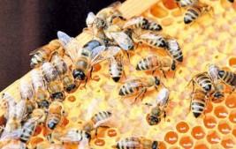 Piauí é o segundo maior exportador de mel do país