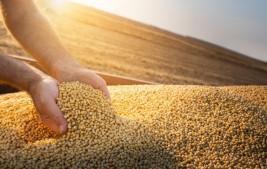 Safra de grãos deve atingir 271,7 milhões de toneladas