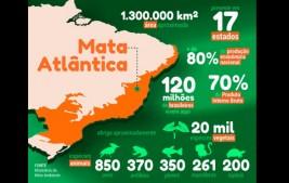 Aplicativo reúne informações sobre as espécies vegetais da Mata Atlântica