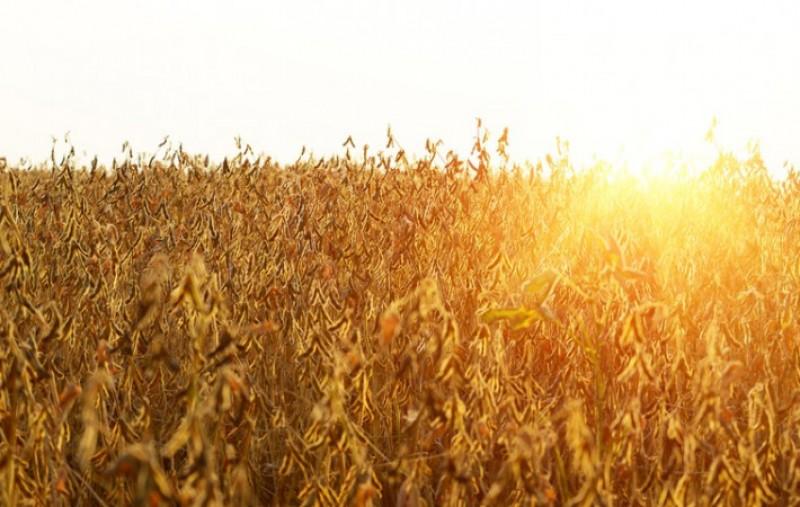 Exportações do agro ultrapassam barreira dos US$ 100 bilhões pela segunda vez