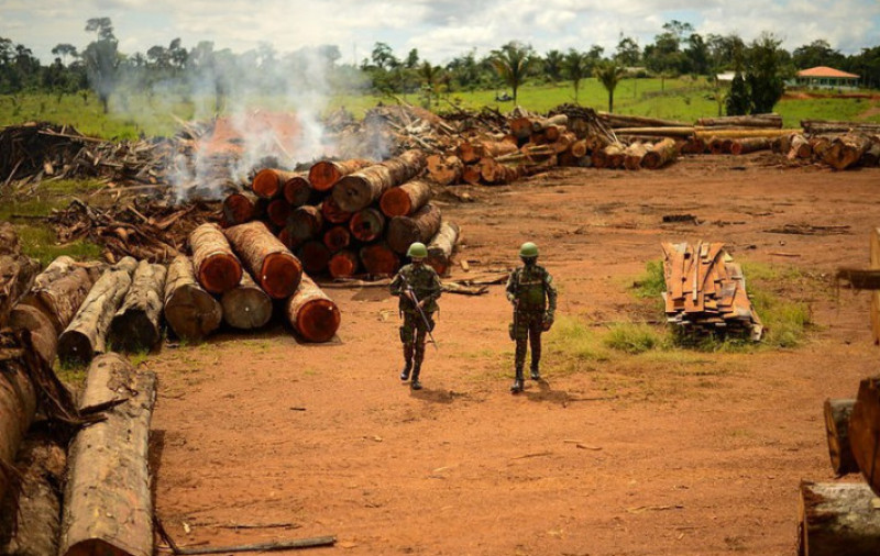 Brasil trabalha para reduzir desmatamento ilegal