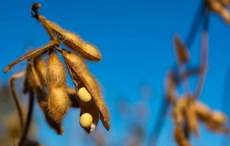 Publicado zoneamento agrícola da soja para safra 2021/2022