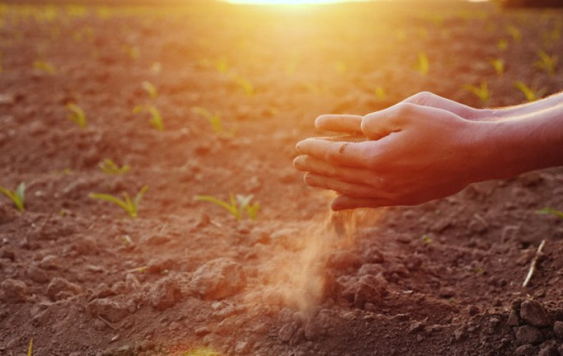Garantia-Safra autoriza o pagamento para mais de 380 mil agricultores no ciclo da safra 2019/2020